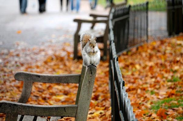 park bench squirrel