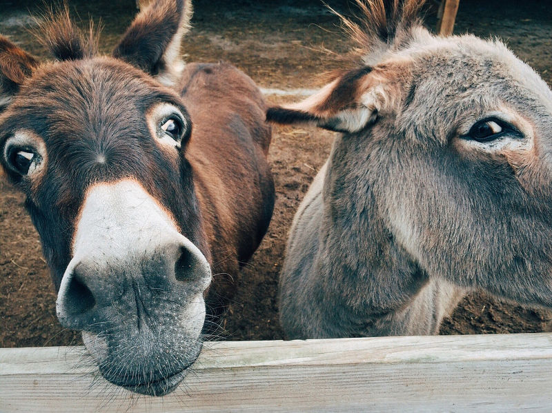 donkeys Vauxhall City Farm London